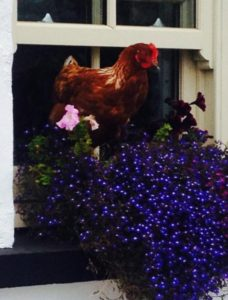 Riverside Cottage B&B Doolin Hen